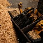 Holz: die nachhaltige Energiequelle für...