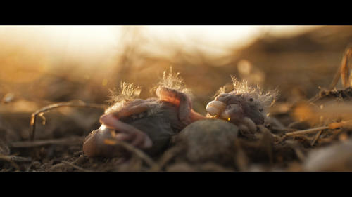 """Audi Environmental Foundation sponsors NaturVision short film prize for """"Those in Grass Houses"""""""