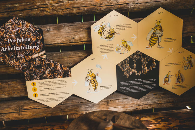 Beekeeping over the course of time: journey of exploration with Pauline the Bee in the Markus Wasmeier Museum