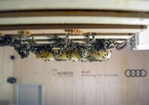 Bienen jetzt in Smart HOBOS-Bienenstock  bei Audi in Münchsmünster eingezogen