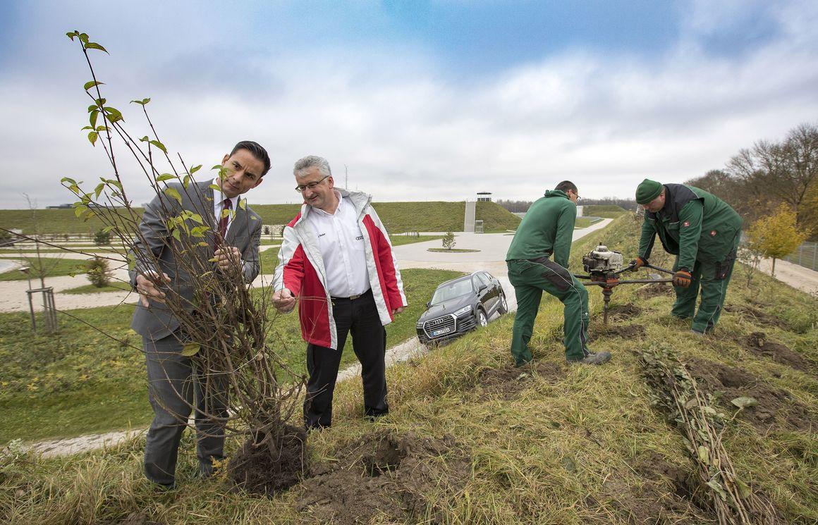 Neubepflanzung auf dem Gelände Audi Neuburg