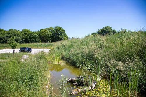 Biodiversität Audi Neuburg: Feuchtbiotop