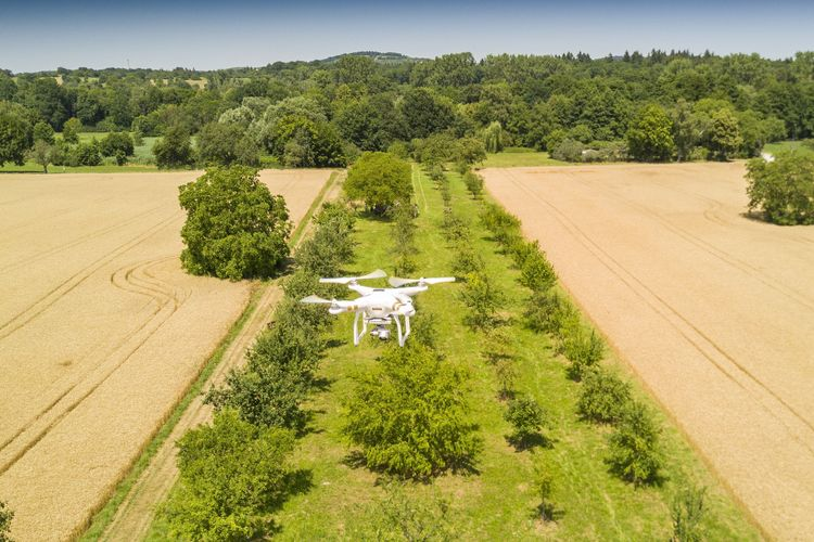Audi Environmental Foundation supports drone flights to measure and conserve mixed orchards