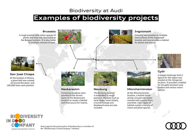 Audi creates near-natural habitat for animals and plants on 17 hectares of the plant site
