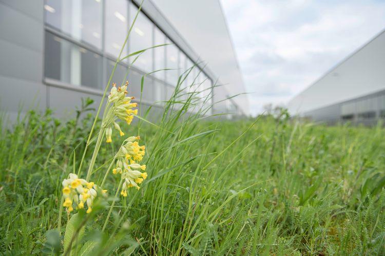 Audi schafft auf 17 Hektar Werkgelände naturnahen Lebensraum für Tiere und Pflanzen