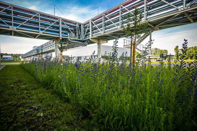 Audi erhält Auszeichnung für Biodiversitätsprojekt am Standort Münchsmünster